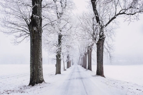 雪化粧した並木の一本道