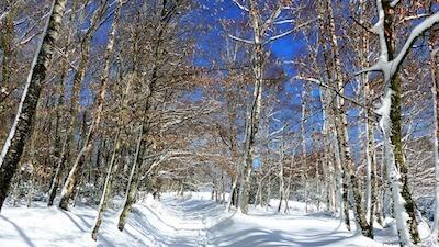 晴れた雪山の山道