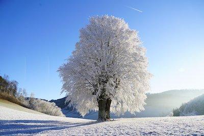 晴れた日の樹氷