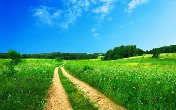 春の青空と草原に伸びる車の轍