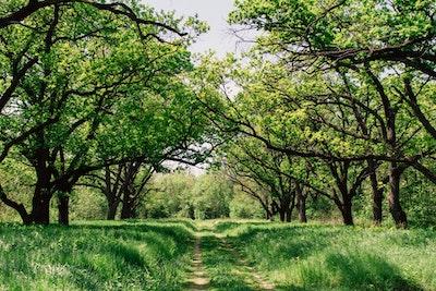 春の草原と並木の間の轍
