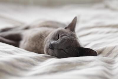 寝ている灰色の猫