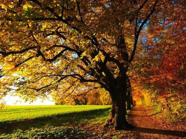 紅葉の並木の風景