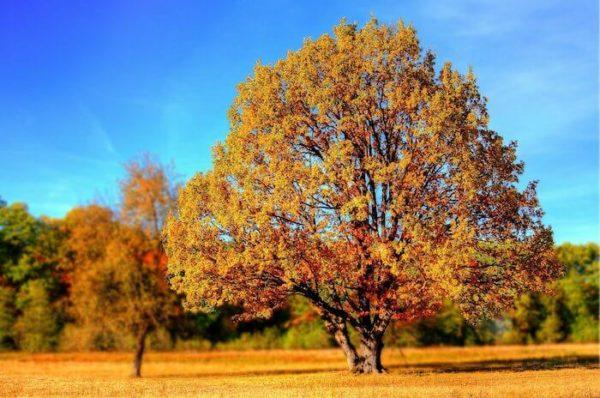 紅葉した木と晴れた空