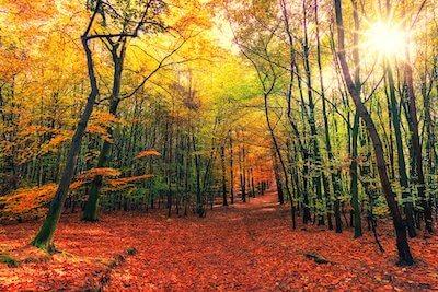紅葉が深まる山の小径