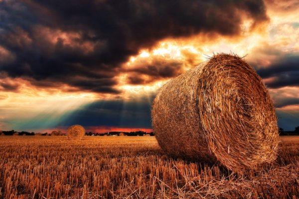 収穫後の麦畑