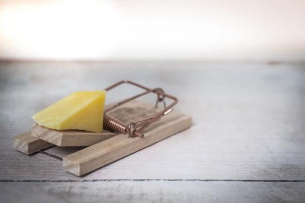 ネズミ捕りに仕掛けたチーズ