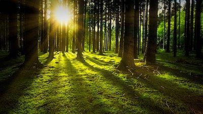 苔むす森の大地