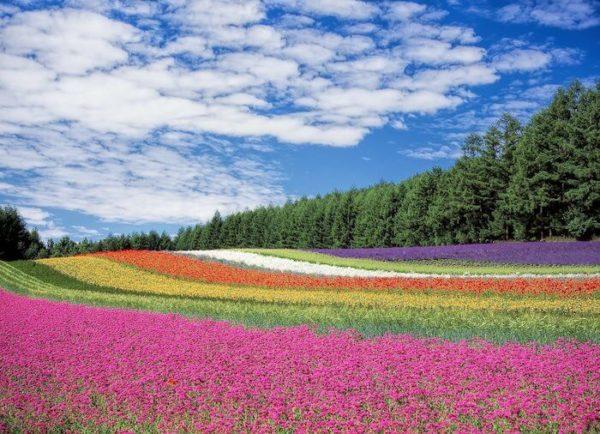 虹色の花畑
