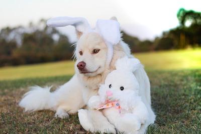 ウサギに変装した犬