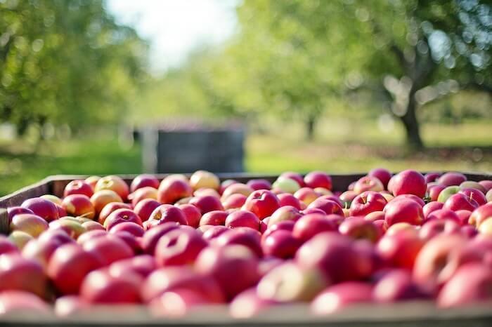 木箱にはいった収穫されたリンゴ