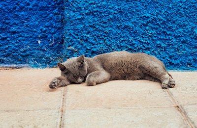 寝ているブルーグレーの猫