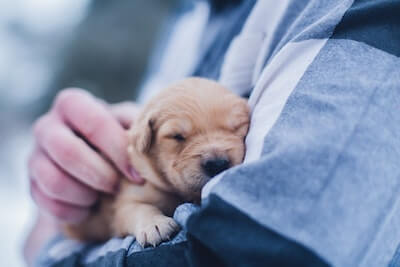 抱き抱えられた子犬