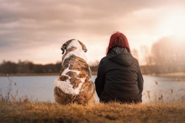飼い主と犬の後ろ姿