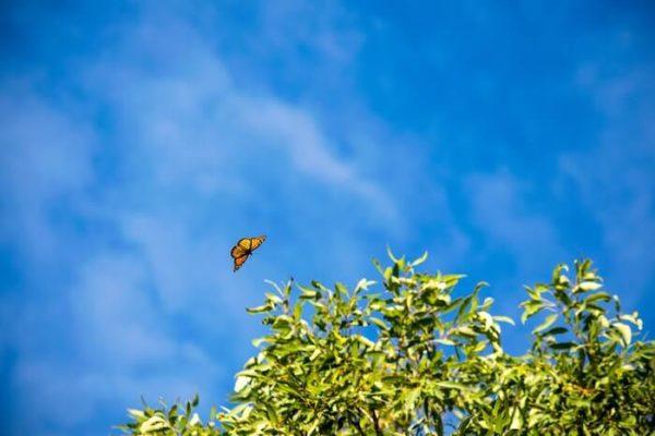 青空に舞う蝶