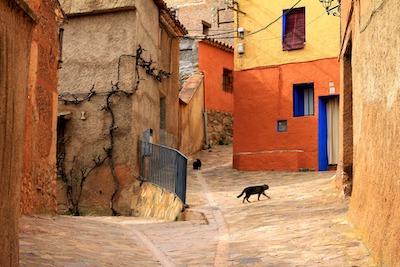 街の中を歩く野良猫
