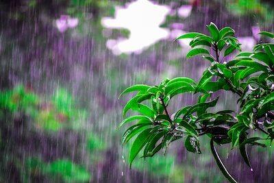 雨が降る森