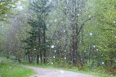 雨が降っている森