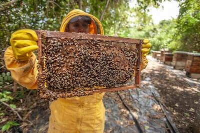 巣箱の蜂の巣を持つ人