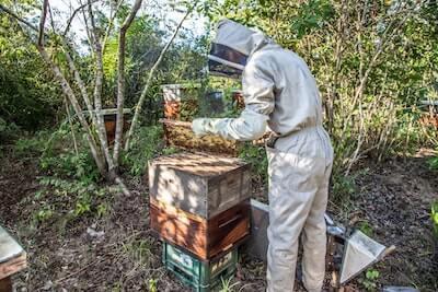 養蜂する人