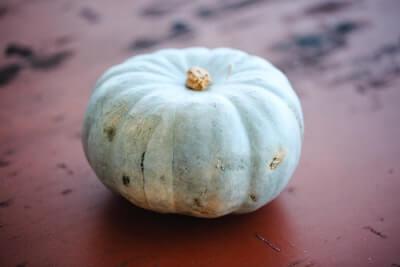 ポティロンのかぼちゃ