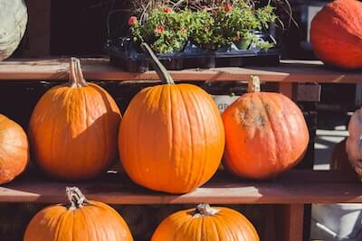 丸いかぼちゃ