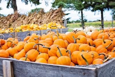 山積みのかぼちゃ