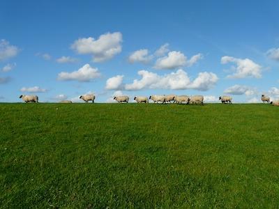 羊のような雲