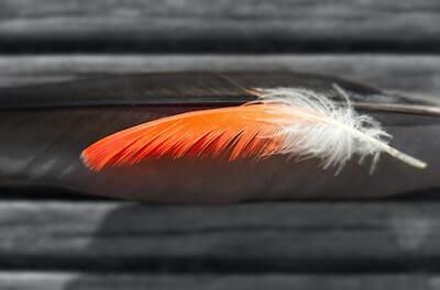 朱色の鳥の羽