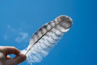 1枚の鳥の羽