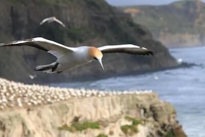 空飛ぶ海鳥