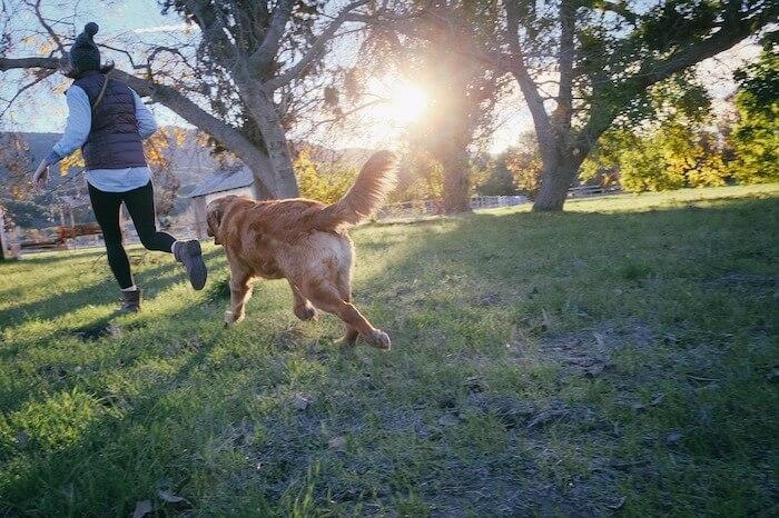 飼い主の後を追う犬
