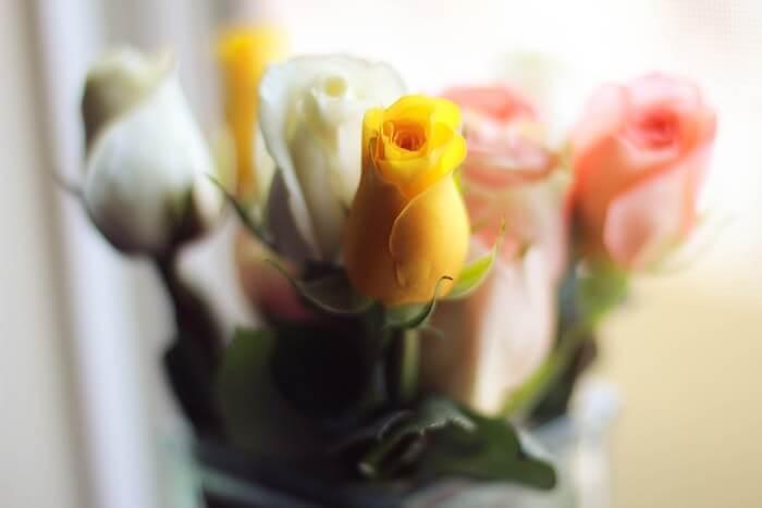 白と黄色とピンクのバラ
