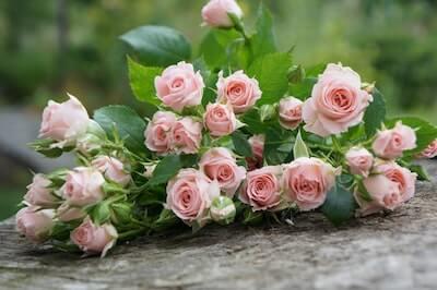 ピンクのバラの束