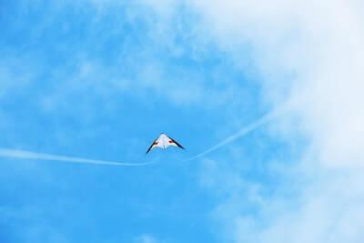 向かい風で飛ぶ凧