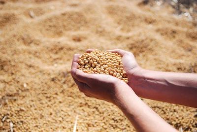 掌にすくった大豆