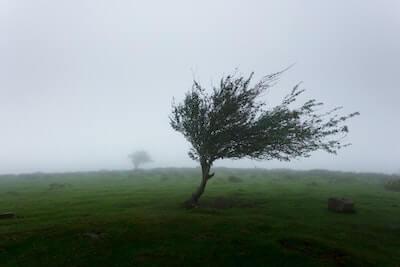 強風で傾いた木