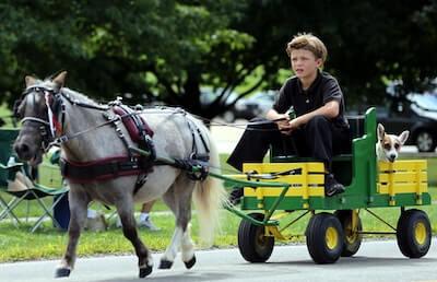 馬に引かれる車