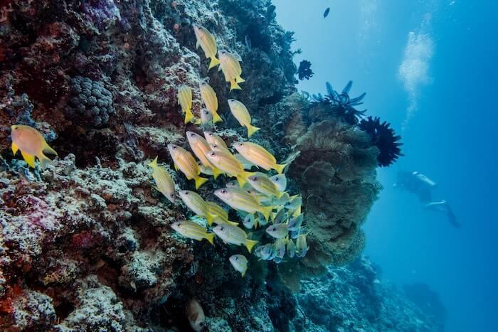 岩場を泳ぐ魚