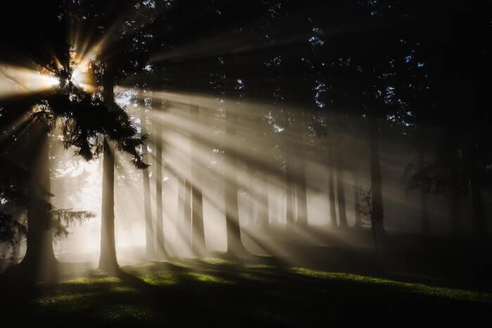 森の中に差し込む光