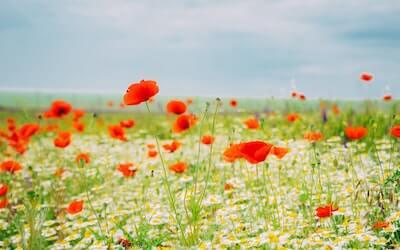 美しい花のある景色