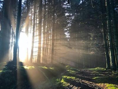 林に差し込む自然の光