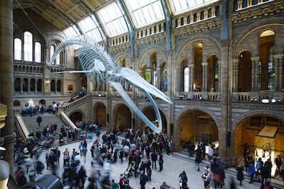 博物館の鯨の骨格標本