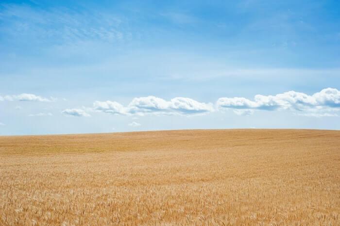 小麦畑の大地