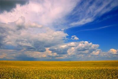 大地の恵みの農作物