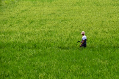 米作りをする農家